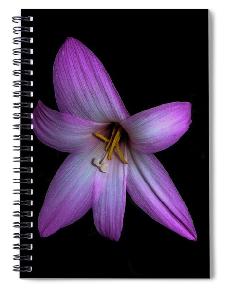 Solo In Pink Spiral Notebook