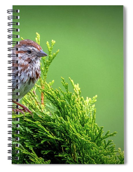 Song Sparrow Perched - Melospiza Melodia Spiral Notebook
