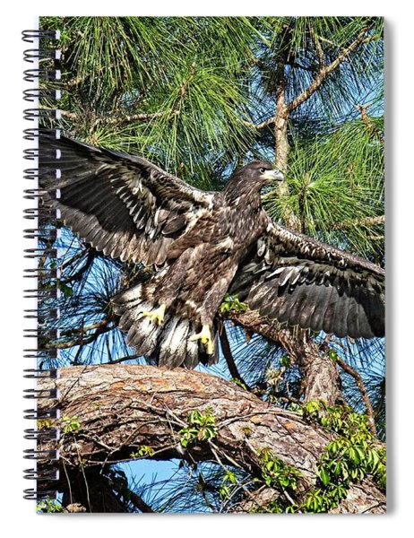 Soon After Fledging Spiral Notebook