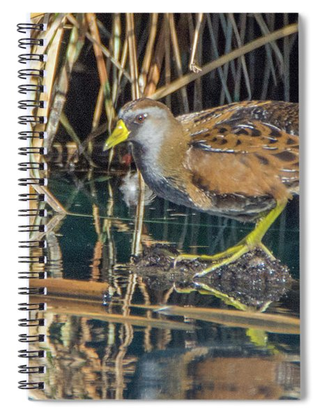 Sora 0212-111017-1cr Spiral Notebook