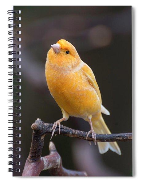 Spanish Timbrado Canary Spiral Notebook