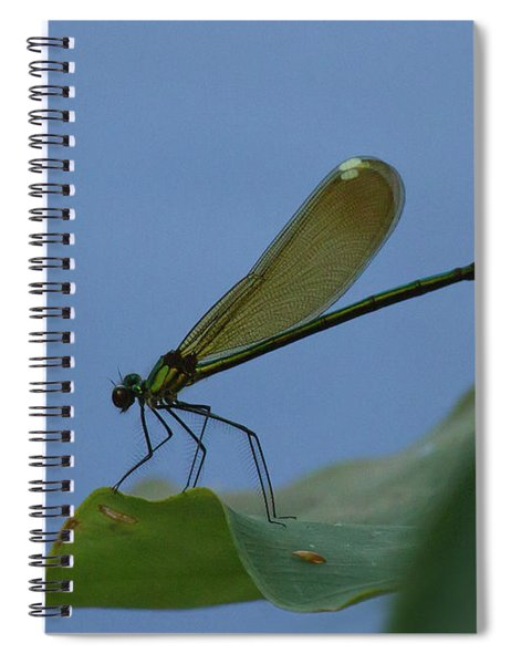 Sparkling Jewelwing #2 Spiral Notebook