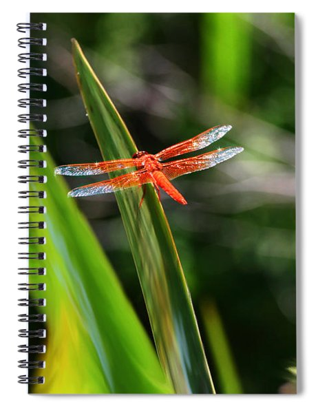Sparkling Red Dragonfly Spiral Notebook