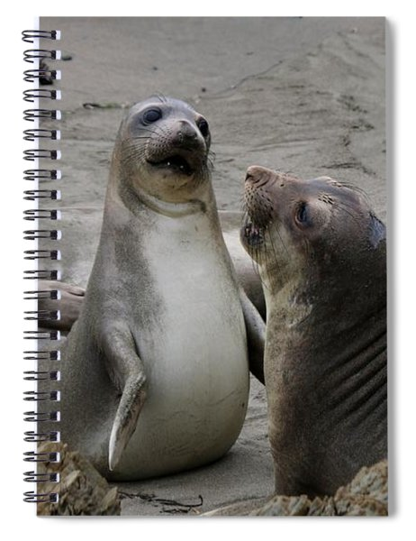 Sparring Seals  Spiral Notebook