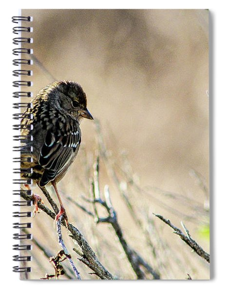 Snarky Sparrow Spiral Notebook