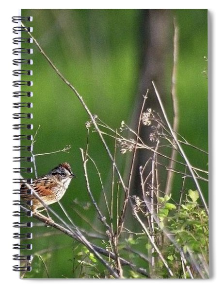 Sparrow On A Branch Spiral Notebook