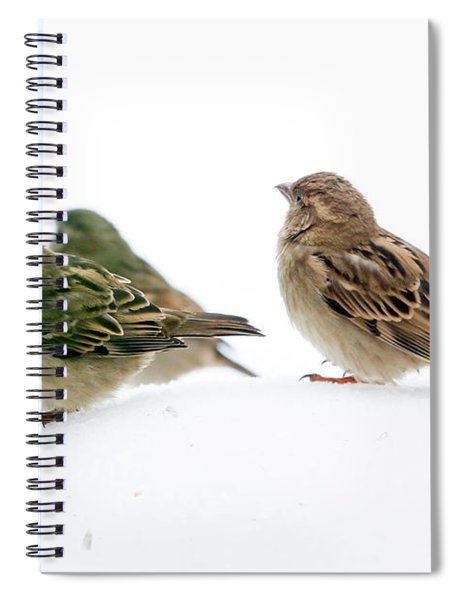 Sparrows In The Snow Spiral Notebook