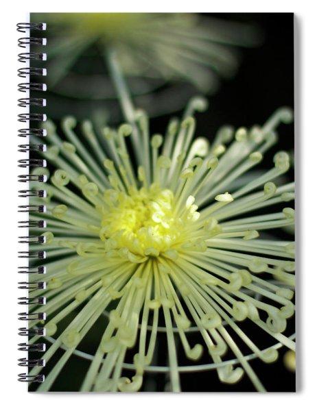 Spiral Chryanth Spiral Notebook