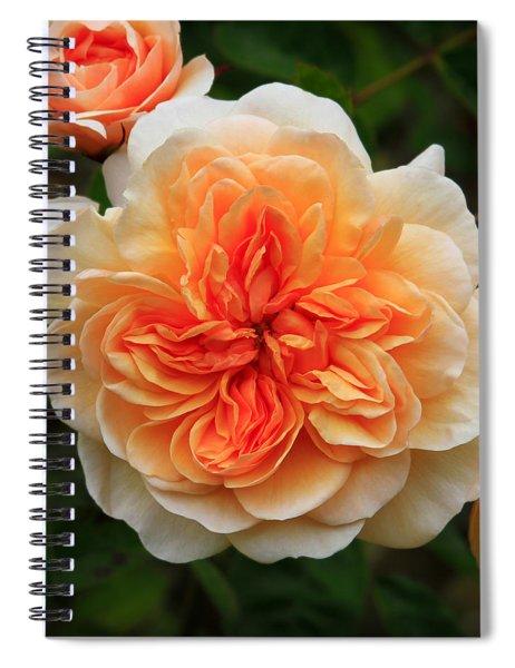 Splendiferous Apricot Rose Spiral Notebook