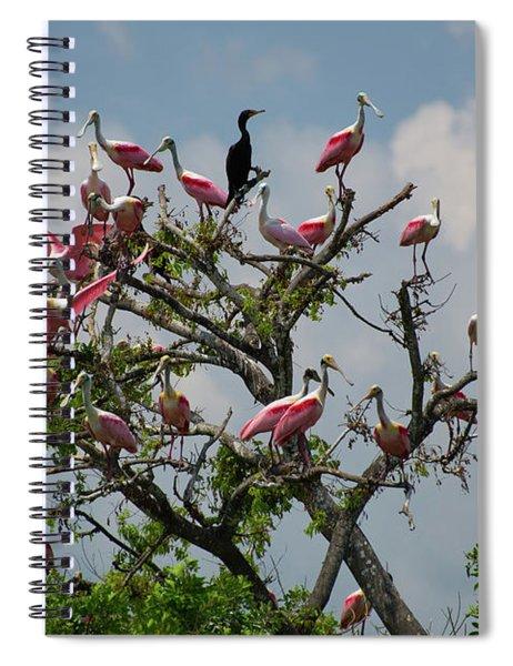 Spoonbill Tree Spiral Notebook
