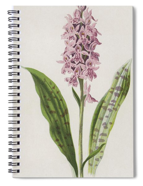 Spotted Orchis Spiral Notebook