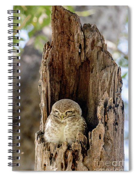 Spotted Owlet Spiral Notebook