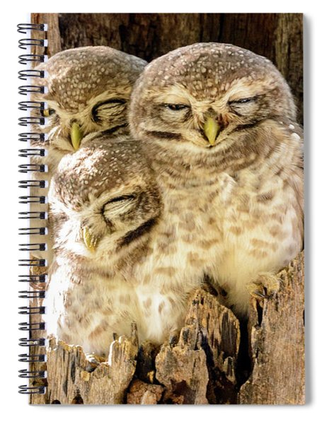 Spotted Owlets Spiral Notebook