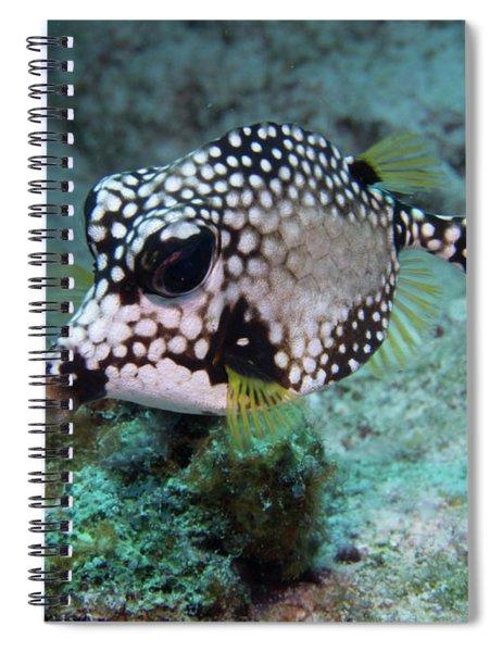 Spotted Trunkfsh Spiral Notebook