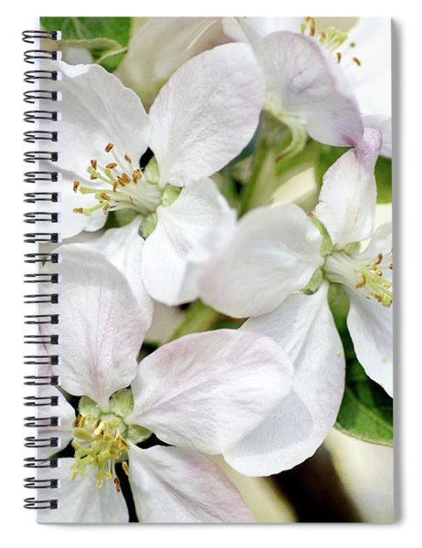 Spring Awakening Spiral Notebook