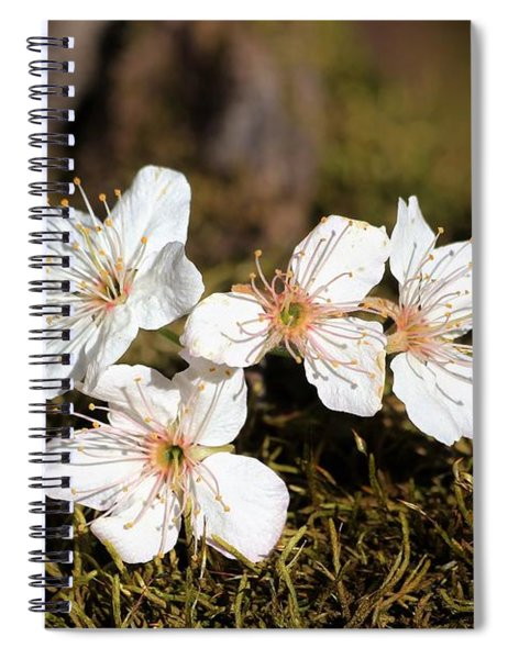 Spring Blossoms On Moss Spiral Notebook
