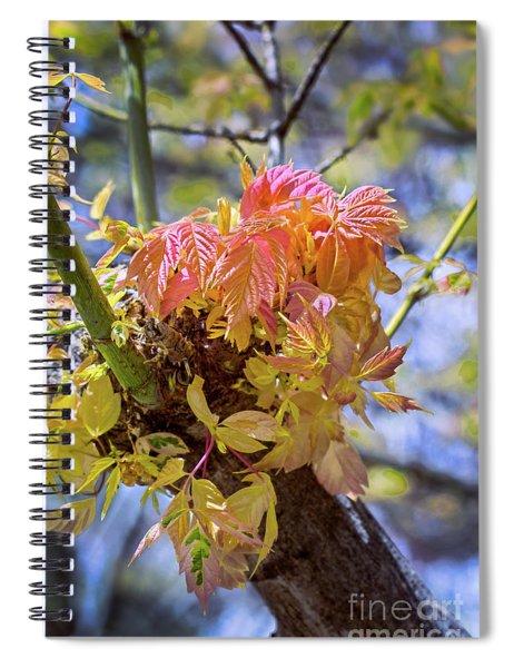 Spring Box Elder Spiral Notebook