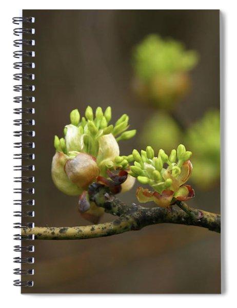 Spring Buds 9365 H_2 Spiral Notebook