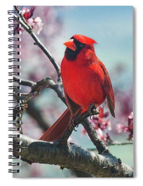 Spring Cardinal 1 Spiral Notebook