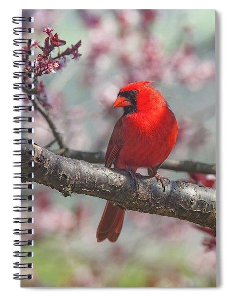 Spring Cardinal 2 Spiral Notebook