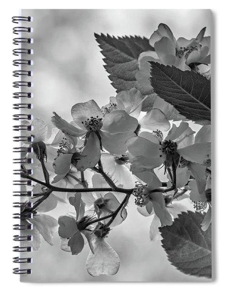 Spring Dream Bw Spiral Notebook