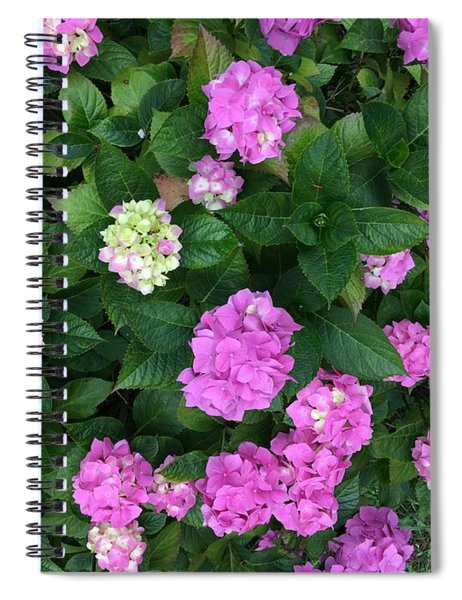 Spring Explosion Spiral Notebook