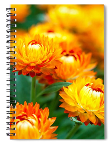 Spring Flowers In The Afternoon Spiral Notebook