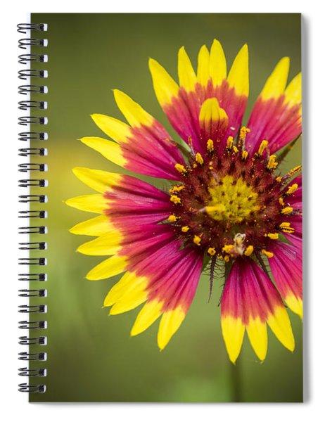 Spring Indian Blanket Spiral Notebook