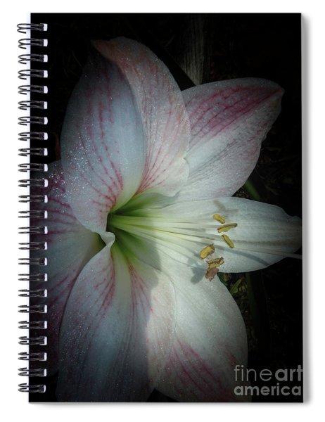 Spring Morning Amaryllis Spiral Notebook