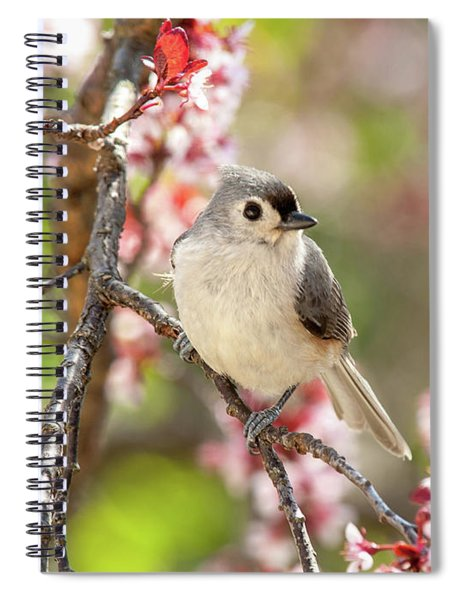 Spring Tufted Titmouse 2018 Spiral Notebook