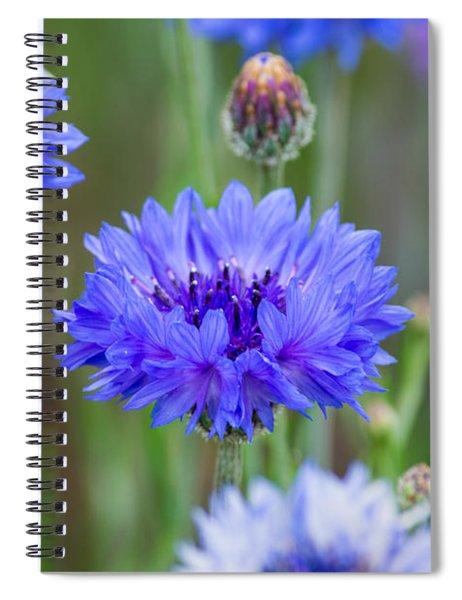 Springtime Blues Spiral Notebook