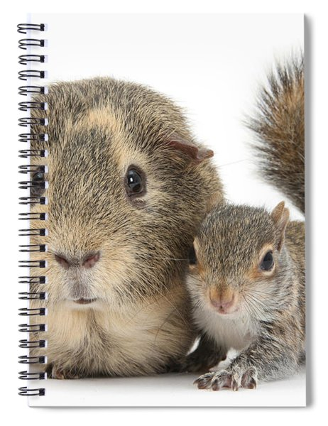 Squirrel And Guinea Spiral Notebook