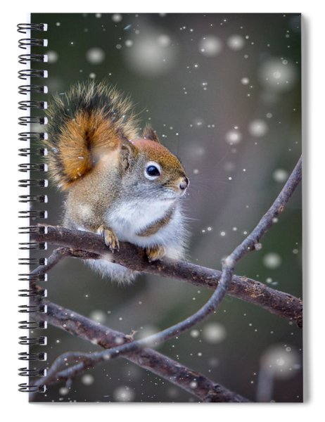 Spiral Notebook featuring the photograph Squirrel Balancing Act by Patti Deters
