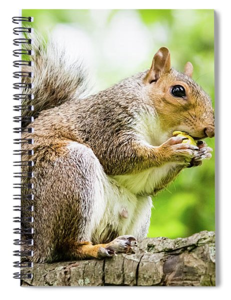 Squirrel Eating On A Branch Spiral Notebook