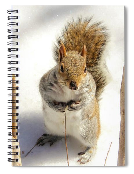 Spiral Notebook featuring the photograph Squirrel In Snow by Alison Frank