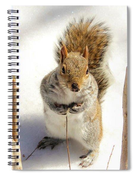 Squirrel In Snow Spiral Notebook
