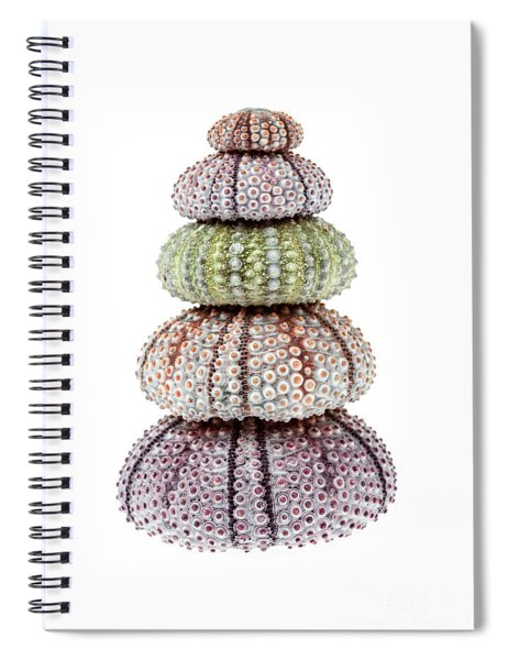 Stack Of Sea Urchins Spiral Notebook
