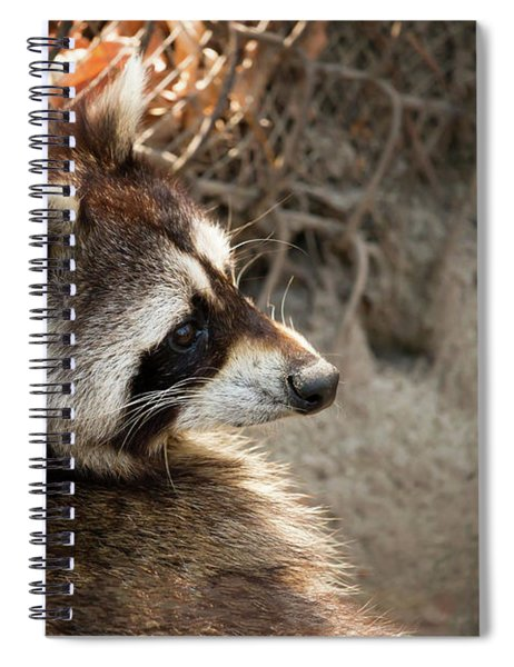 Staring Raccooon Spiral Notebook