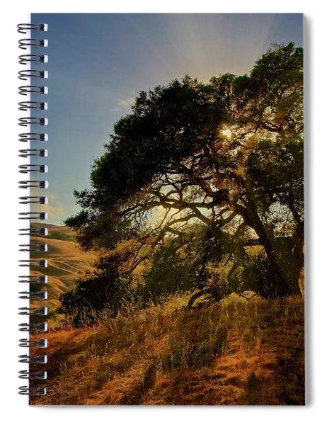 Starlight, California Oak Spiral Notebook