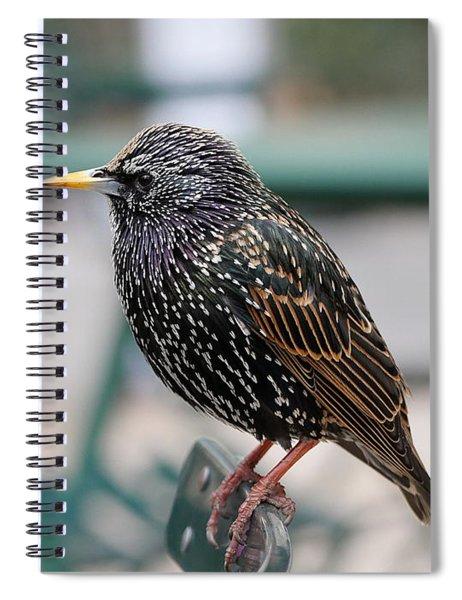 Starling Spiral Notebook