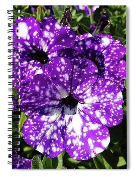 Starry Petunias... Spiral Notebook