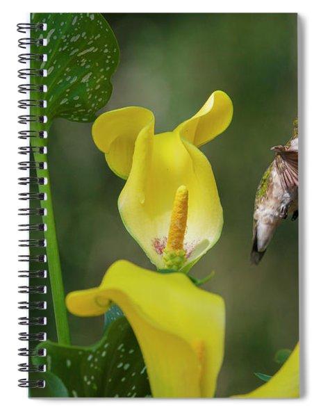 Stem To Sky A Hummingbird Flies Spiral Notebook