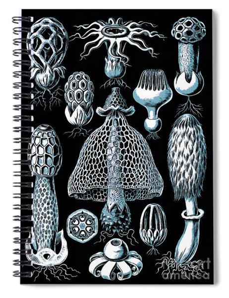 Stinkhorn Mushrooms Vintage Illustration Spiral Notebook