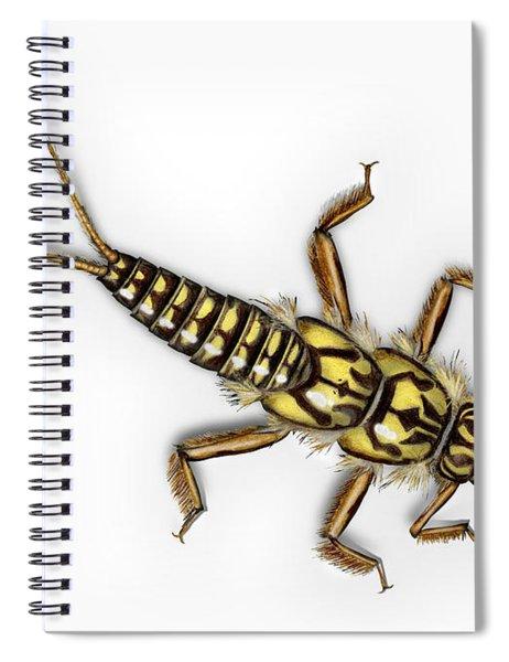 Stonefly Larva Nymph Plecoptera Perla Marginata - Steinflue -  Spiral Notebook