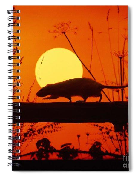 Stranglers Rattus Norvegicus Rat Spiral Notebook