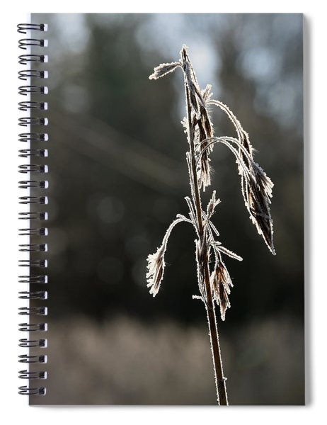Straw In Backlight Spiral Notebook