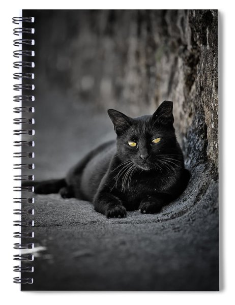 Stray Cat Spiral Notebook