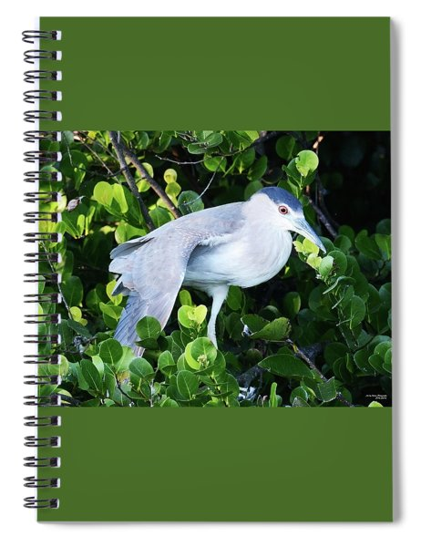 Stretching Its Wings Spiral Notebook