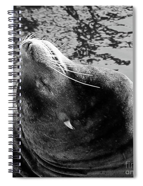 Stretch, Black And White Spiral Notebook