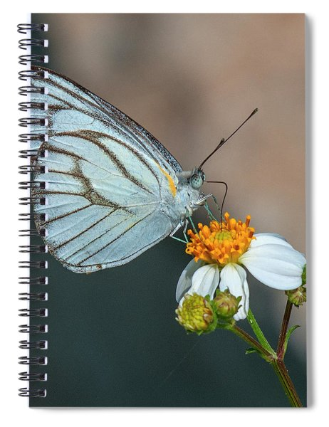 Striped Albatross Butterfly Dthn0209 Spiral Notebook